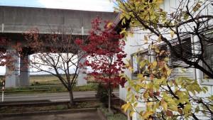 事務所の木々もあっという間に晩秋の風情